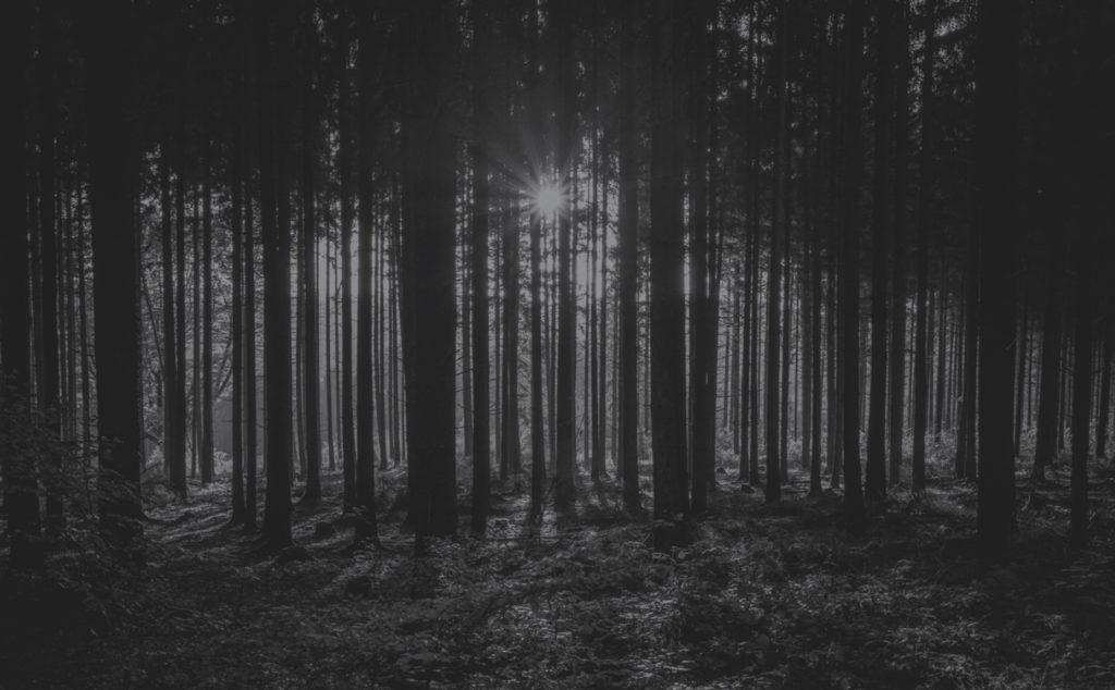alberi-bianco-nero-doorarreda